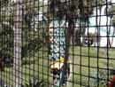 Busch Gardens Tampa 02