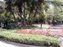 Busch Gardens Tampa 04