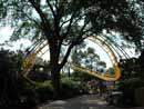 Busch Gardens Tampa 11