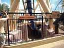 Busch Gardens Tampa 19