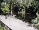 Busch Gardens Tampa 28