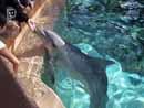 SeaWorld Orlando 003