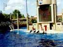 SeaWorld Orlando 007