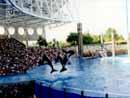 SeaWorld Orlando 008