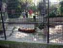 Parco Zoo Falconara 07