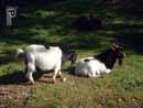Parco Zoo Falconara 12