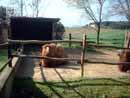 Parco Zoo Falconara 15