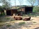 Parco Zoo Falconara 17