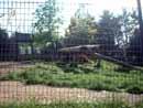 Parco Zoo Falconara 18