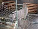 Parco Zoo Falconara 20