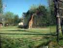 Parco Zoo Falconara 22