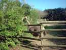 Parco Zoo Falconara 25