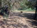 Parco Zoo Falconara 27