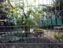 Parco Zoo Falconara 28