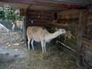 Parco Zoo Falconara 30