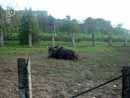 Parco Zoo Falconara 34