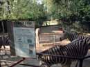 Parco Zoo Falconara 38