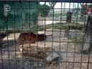 Parco Zoo Falconara 40