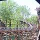 Cedar Point 191