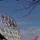 Stricker's Grove 005