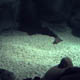 Gardaland Sea Life Aquarium 026