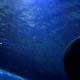 Gardaland Sea Life Aquarium 032