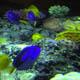 Gardaland Sea Life Aquarium 052