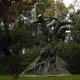 Parque de Atracciones De Madrid 048