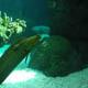 Acquario di Genova 006