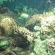 Acquario di Genova 008