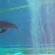 Acquario di Genova 011