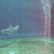 Acquario di Genova 013