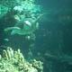 Acquario di Genova 014