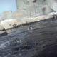 Acquario di Genova 020