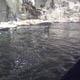 Acquario di Genova 021