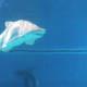 Acquario di Genova 022