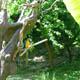 Parco Natura Viva 021