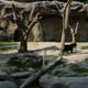 Parco Natura Viva 072