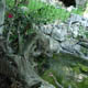 Parco Natura Viva 086
