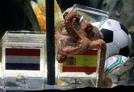 Sea Life Oberhausen Il polpo Paul l'aveva detto, la Spagna vince i mondiali