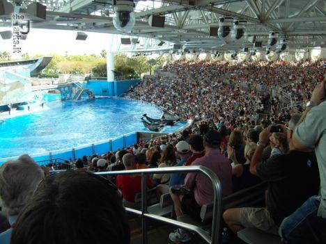 SeaWorld Orlando Presentato One Ocean, fuori dall'acqua gli addestratori