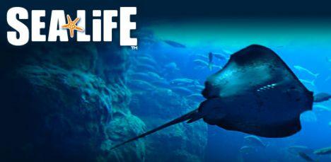 Acquario di Roma Sea Life - Expo Apre l'acquario a primavera 2012