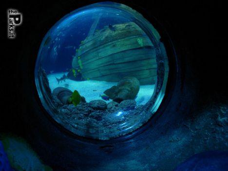Gardaland Sea Life Aquarium Il bacio subacqueo più lungo del mondo