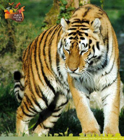 Parco Natura Viva 10 euro per entrambi i parchi, faunistico e safari.