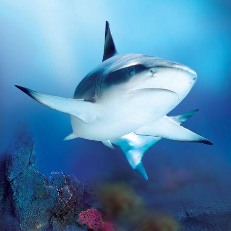 Sea Life Jesolo La Shark Week, approfondimenti e ingresso gratis
