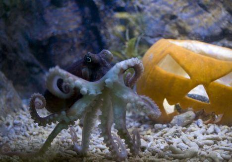 Sea Life Jesolo L'acquario in versione Halloween