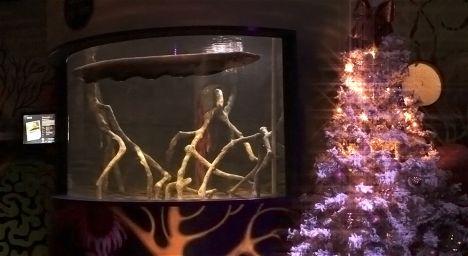 Sea Life Jesolo L'energia dell'anguilla per accendere l'albero di natale