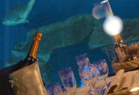 Acquario di Genova 8 dicembre, a cena con gli squali!