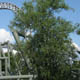 Sarkanniemi Amusement Park 005