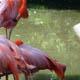 Zoo di Anversa - Zoo Antwerpen 005